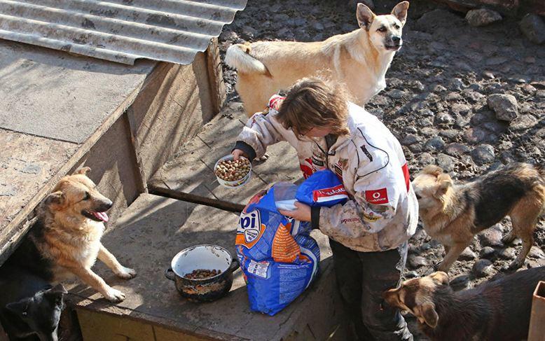 Помощь приютам для собак